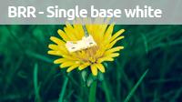 singlebasewhite magazine